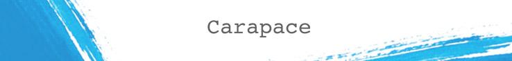 CARAPACE - orangeshine.com
